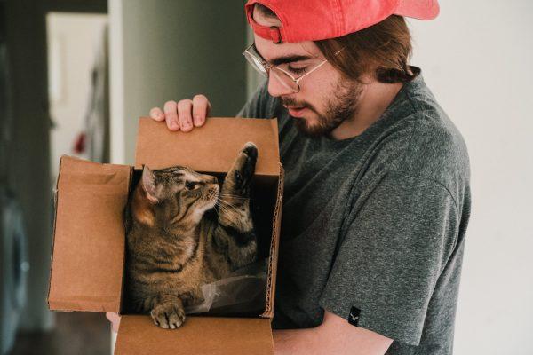 Quarantine Cat in Box