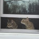 Cats in the new window